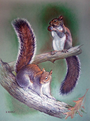 Two Squirrels 1960