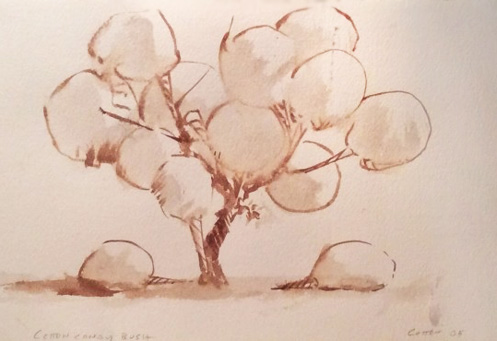Cotton Candy Bush Drawing 2005