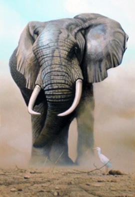 Elephant With Egret