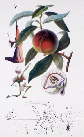 Flordali / Les Fruits Peach 1969 by Salvador Dali