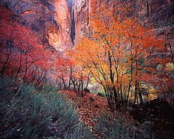 Autumn in Zion AP