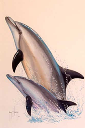 Dolphins Watercolor