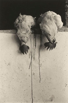 Gallos, Juchitan, 1986 by Graciela Iturbide