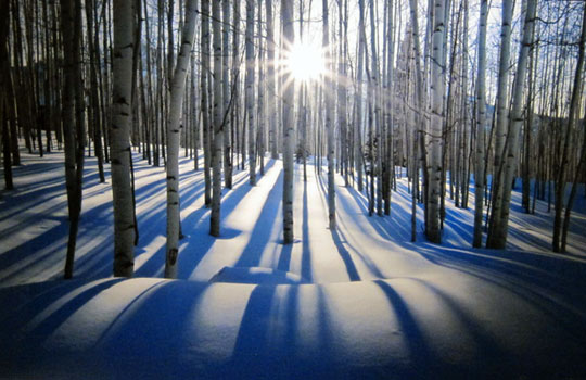 Sunlit Birches (Telluride, Colorado)