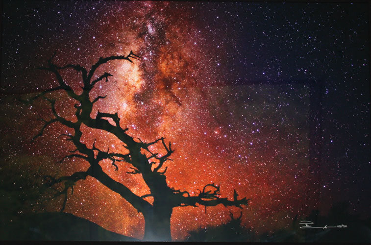 Tree of the Universe