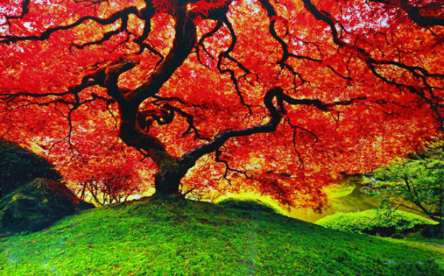 Tree of Life (Oregon) by Peter Lik