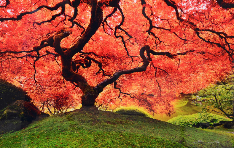 Tree of Life by Peter Lik