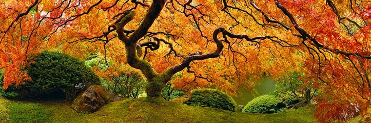 Tree of Zen by Peter Lik