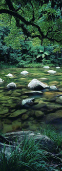 Pristine Waters  by Peter Lik