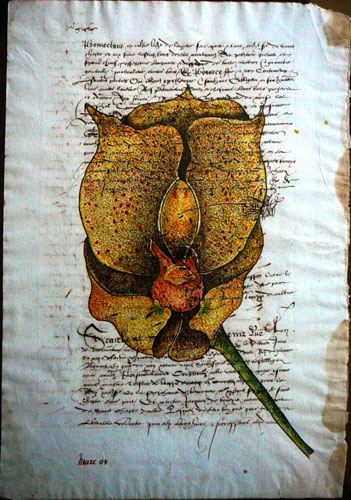 Orchid on Parchment